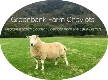 Greenbank Farm Cheviots - pedigree North Country Cheviots from the Lake District